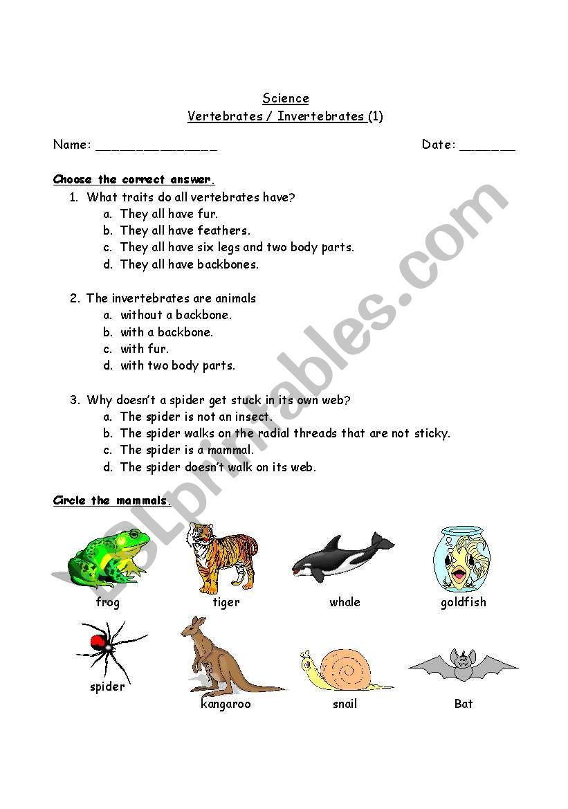 medium resolution of Vertebrates / Invertebrates - ESL worksheet by tawilrim@hotmail.com