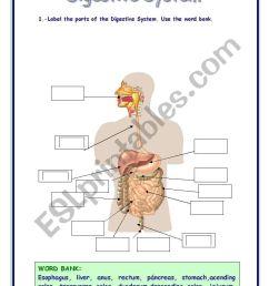 DIGESTIVE SYSTEM VOCABULARY - ESL worksheet by Refuerzo [ 1169 x 821 Pixel ]