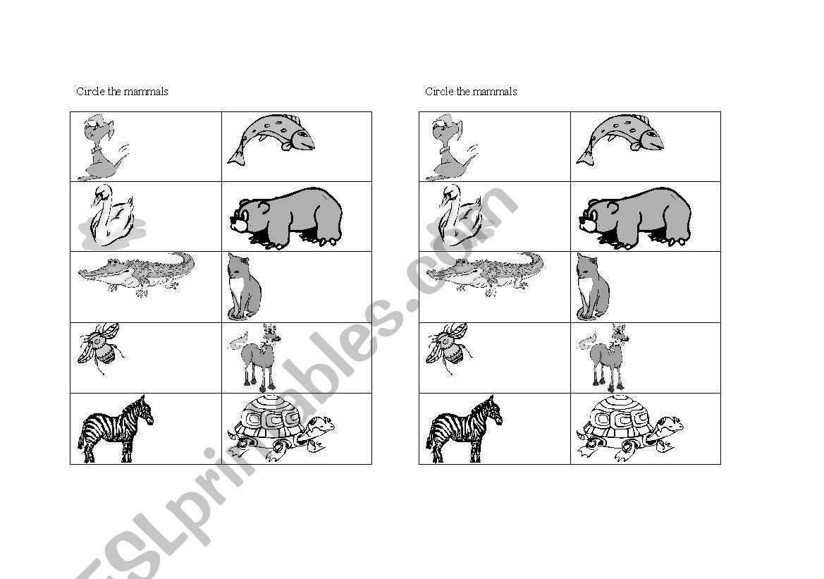 Mammals Worksheet