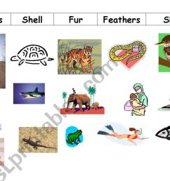 Animal Coverings Scales Worksheet   Printable Worksheets and Activities for  Teachers [ 821 x 1169 Pixel ]