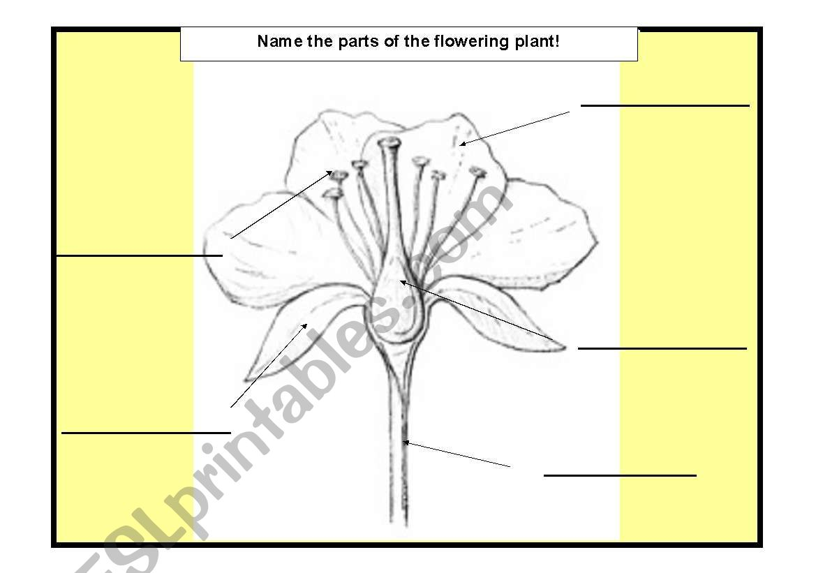 English Worksheets Flower S Parts
