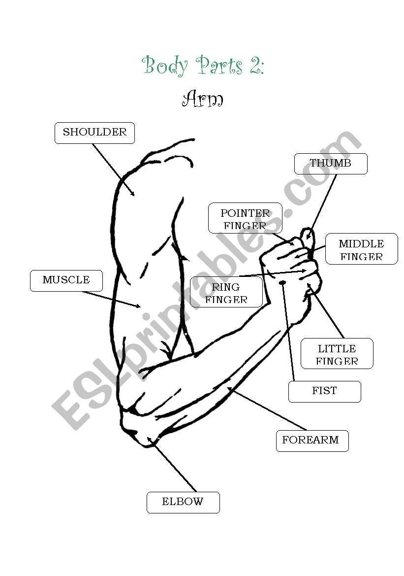 English worksheets: Body Parts 2: Arm