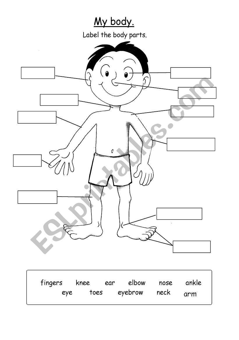 Body Parts Worksheet Esl : Parts Of The Body Esl Games
