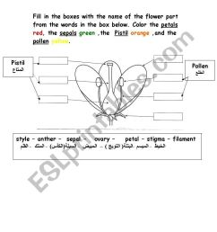parts of flower worksheet [ 821 x 1169 Pixel ]