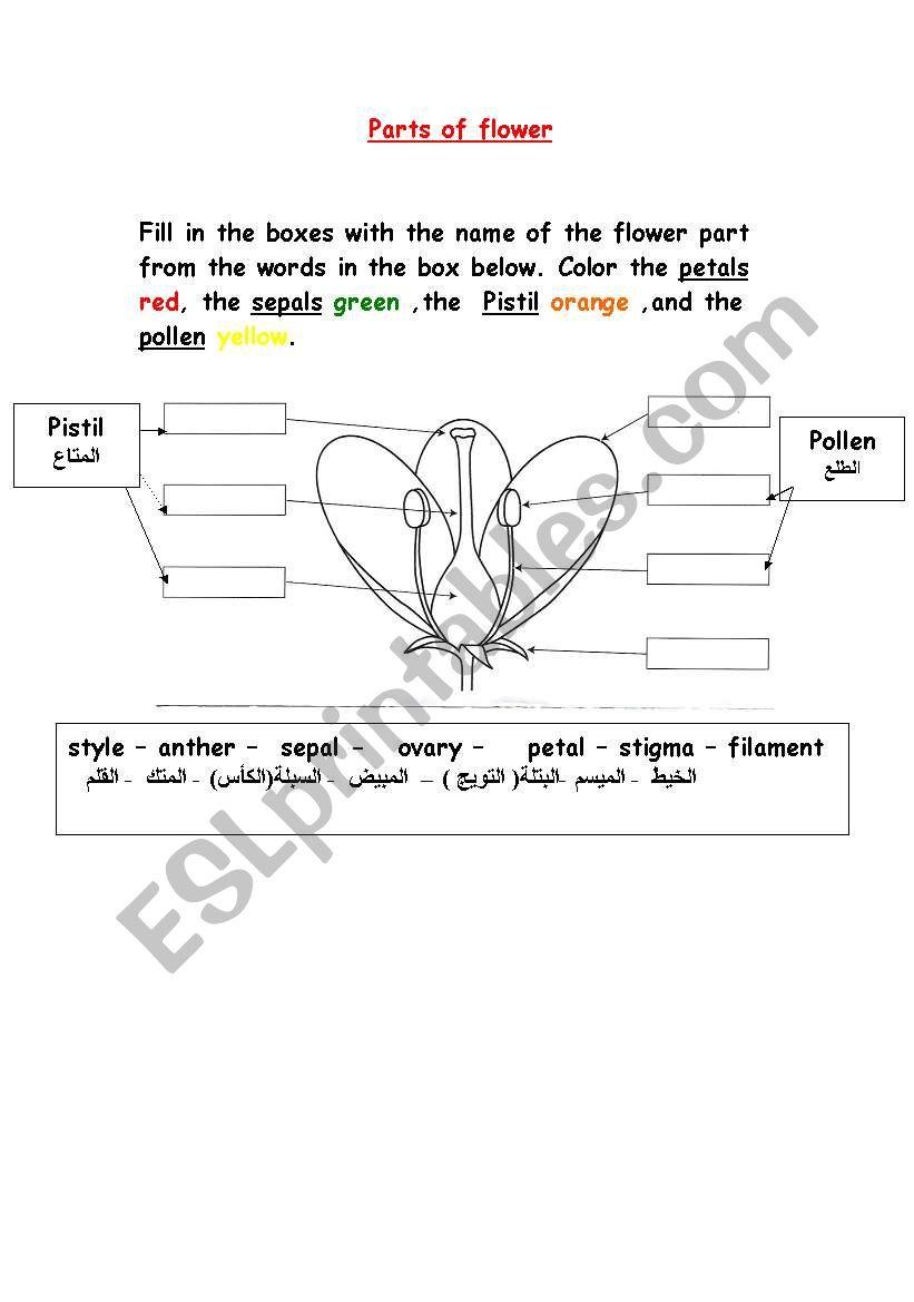 medium resolution of parts of flower worksheet