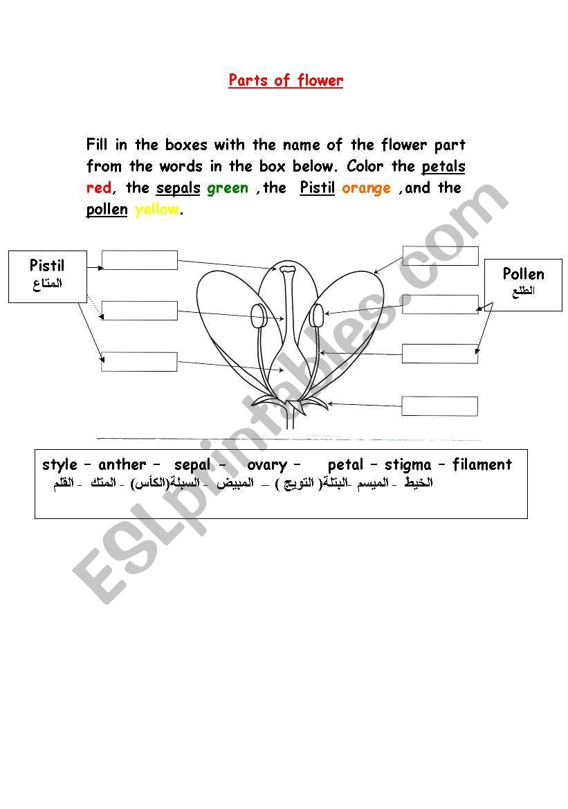 hight resolution of parts of flower worksheet