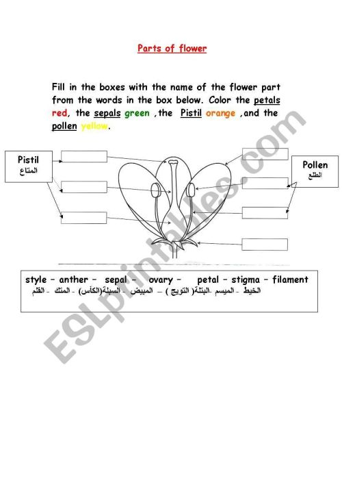 small resolution of parts of flower worksheet