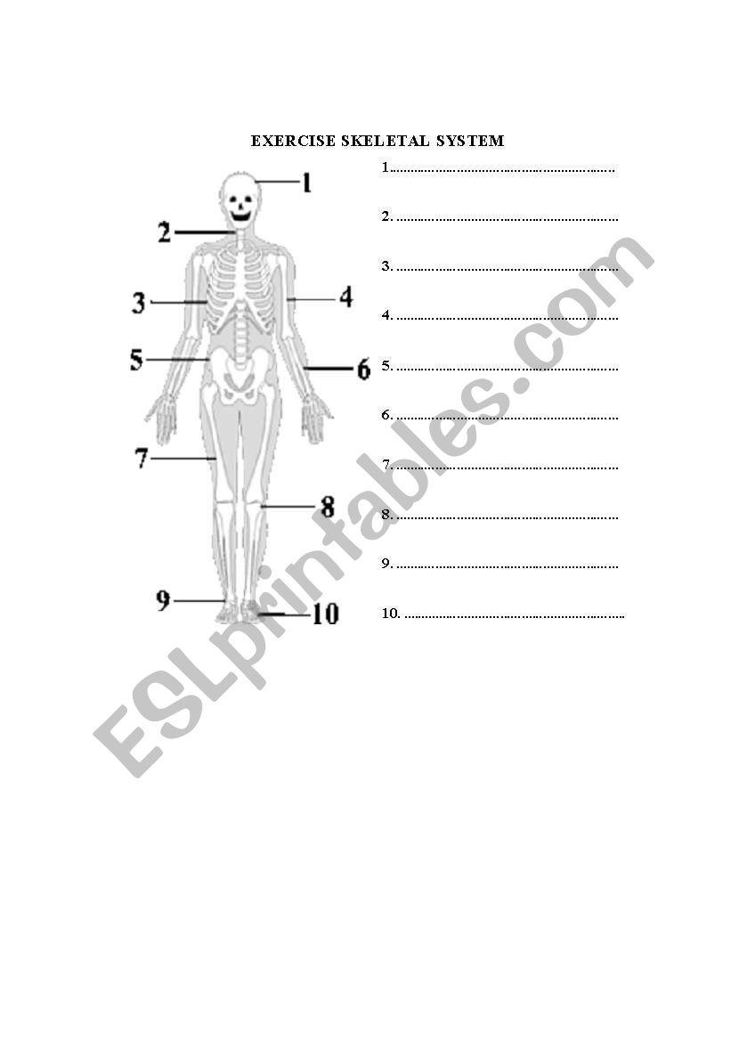 English Worksheets Skeleton