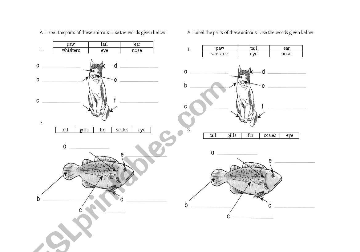 English Worksheets Label Parts Of Animal