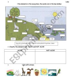 elements in the ecosystem - ESL worksheet by carucha [ 1169 x 821 Pixel ]