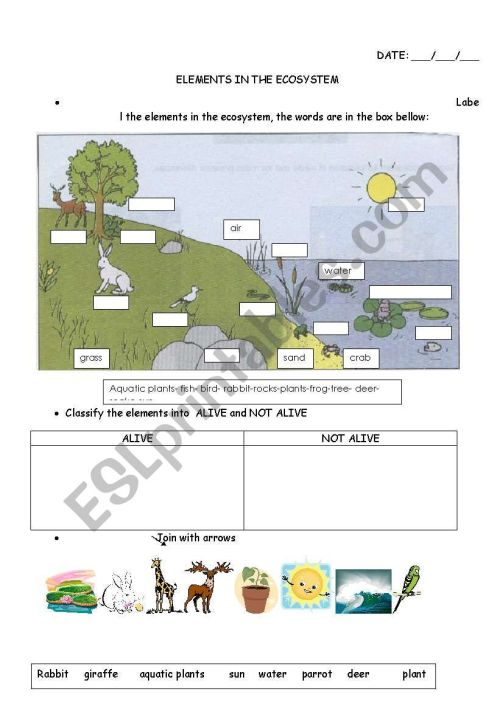 small resolution of elements in the ecosystem - ESL worksheet by carucha