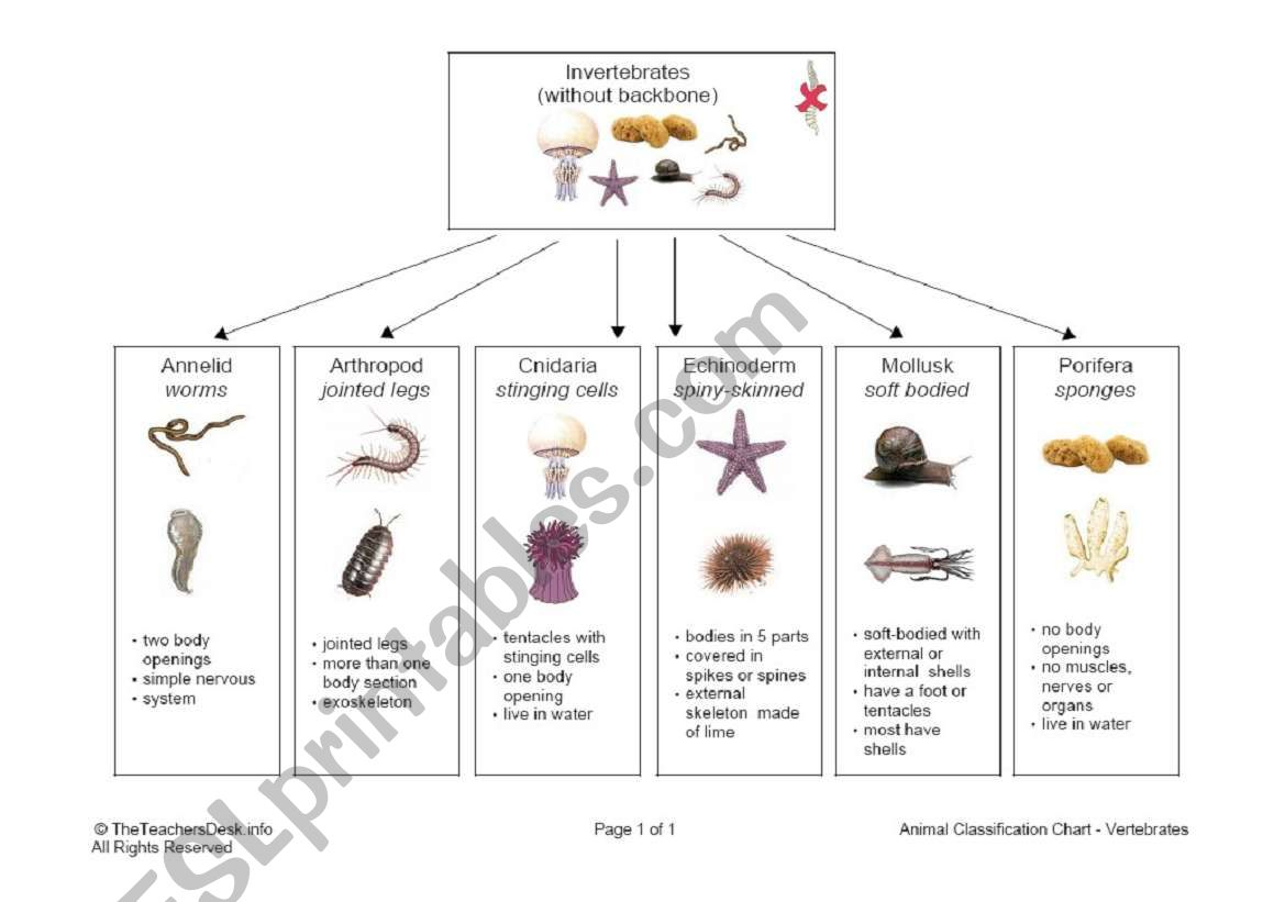 English Worksheets Invertebrate Classification Chart