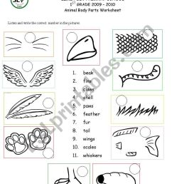Animal body parts - ESL worksheet by kaddaniels [ 1169 x 821 Pixel ]