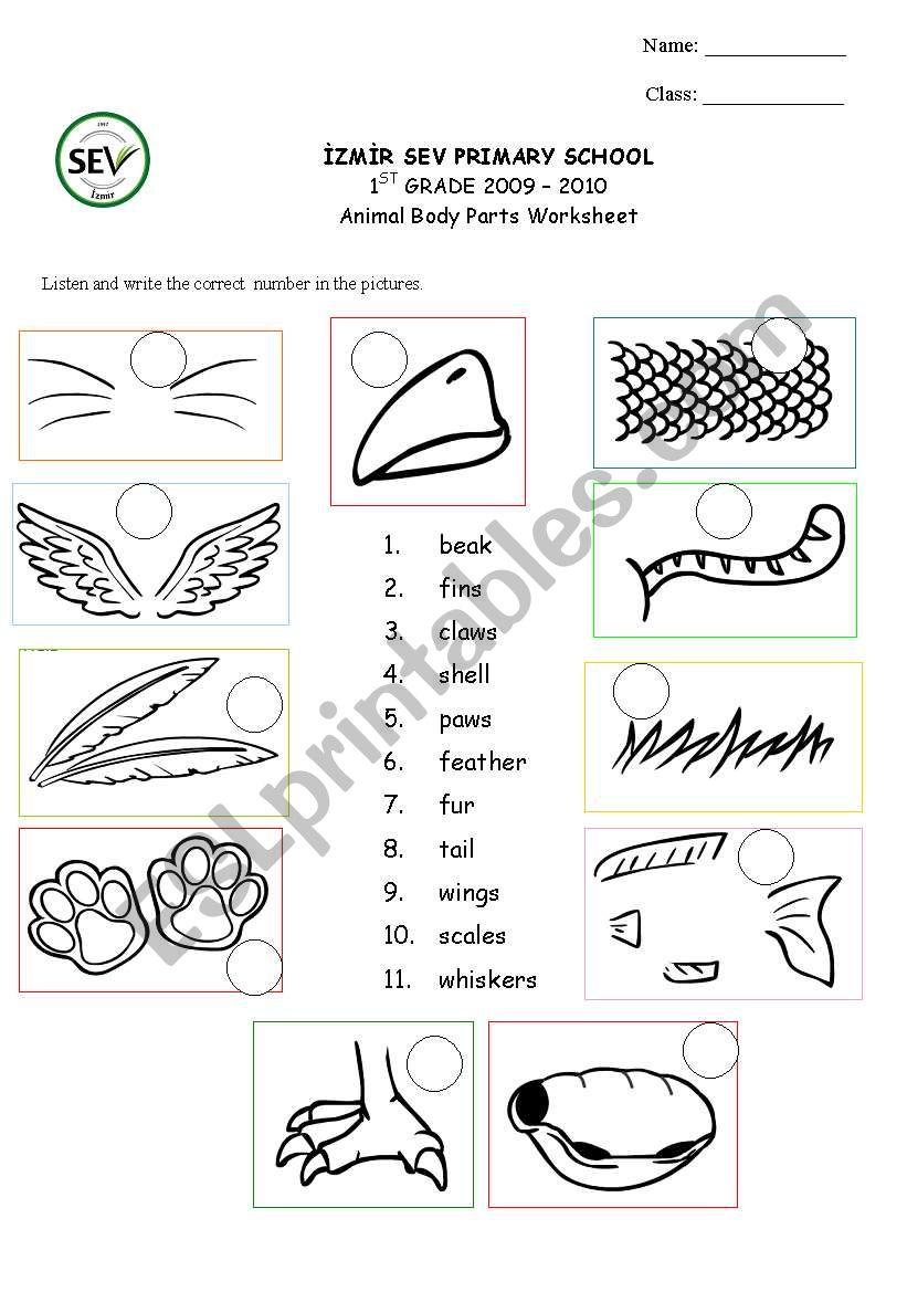 medium resolution of Animal body parts - ESL worksheet by kaddaniels