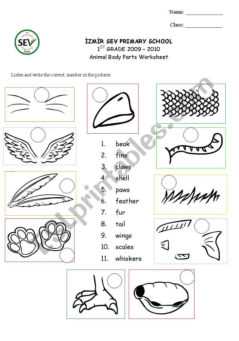 hight resolution of Animal body parts - ESL worksheet by kaddaniels