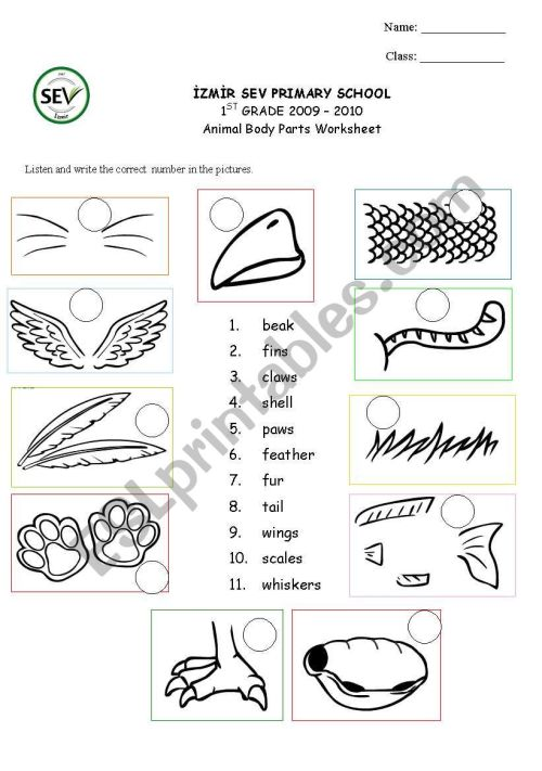 small resolution of Animal body parts - ESL worksheet by kaddaniels
