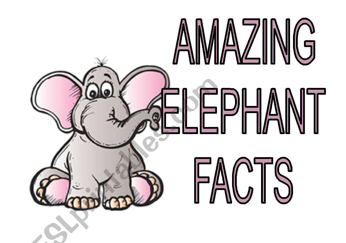 Amazing Elephants Facts
