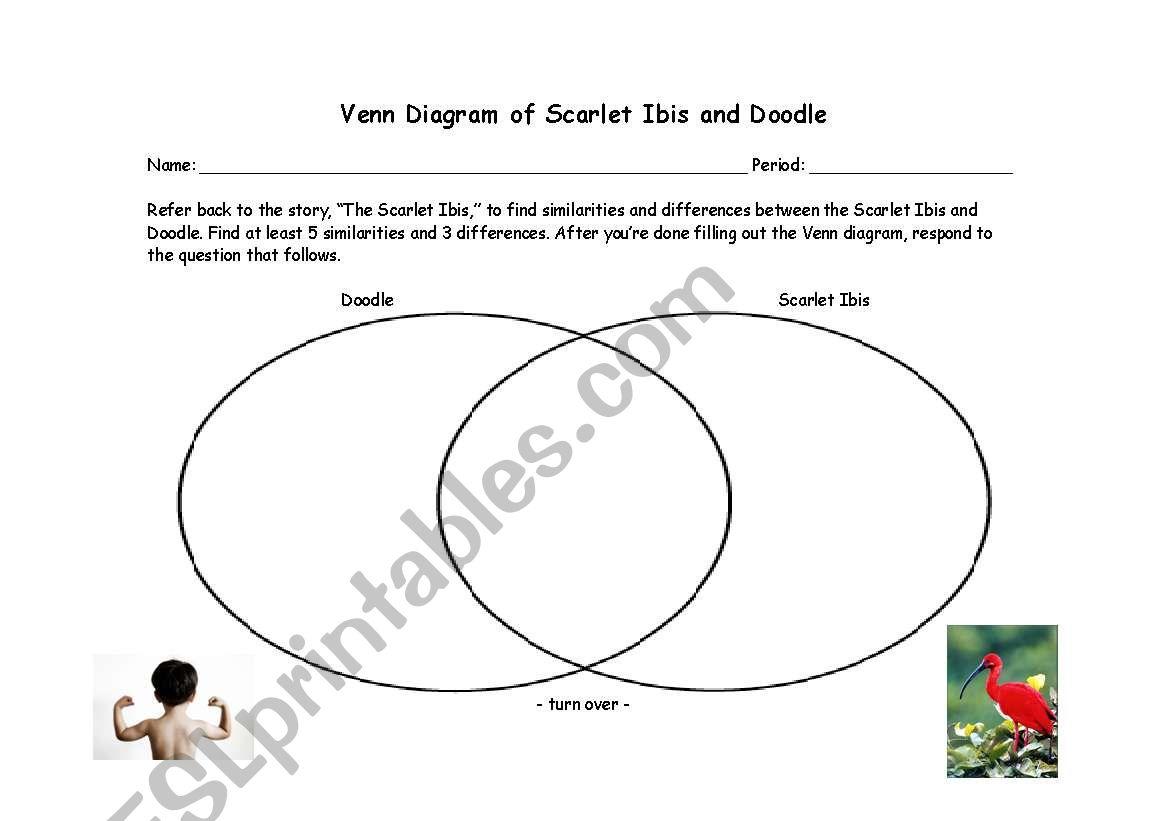 Square Venn Diagram Worksheet