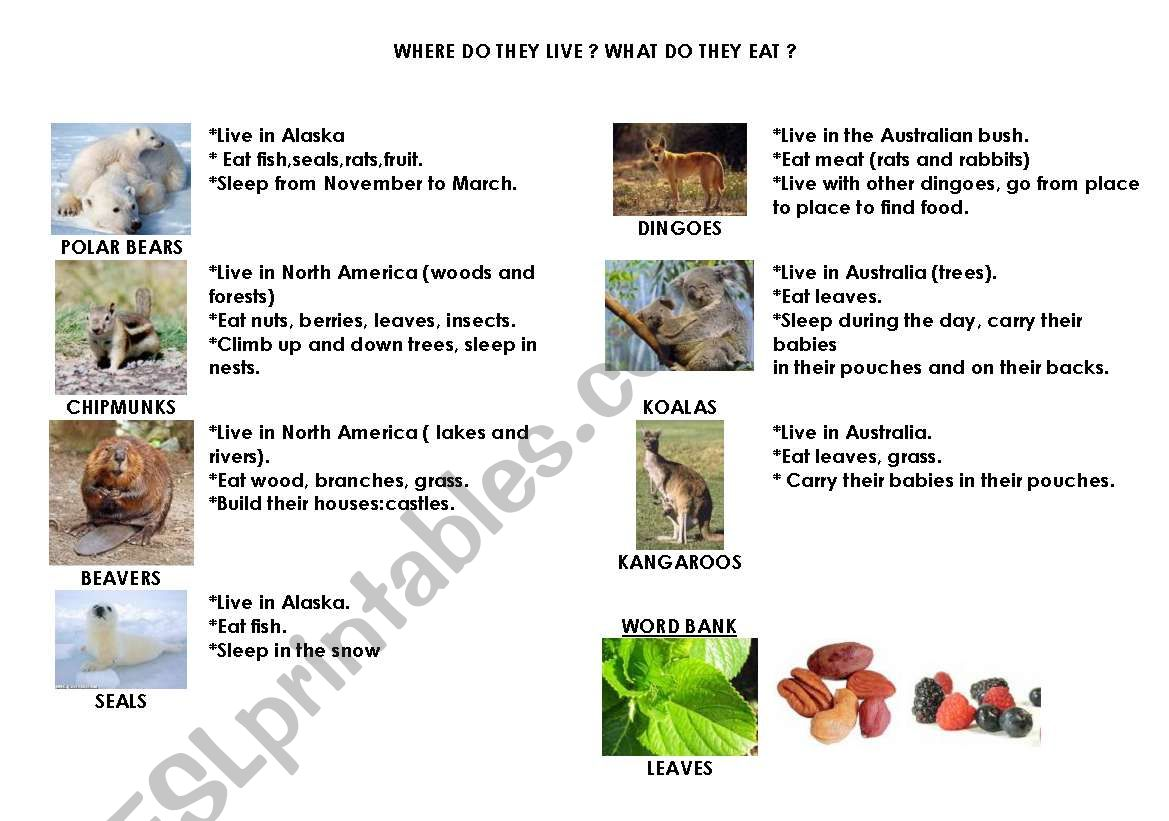 English Worksheets Australian Animals