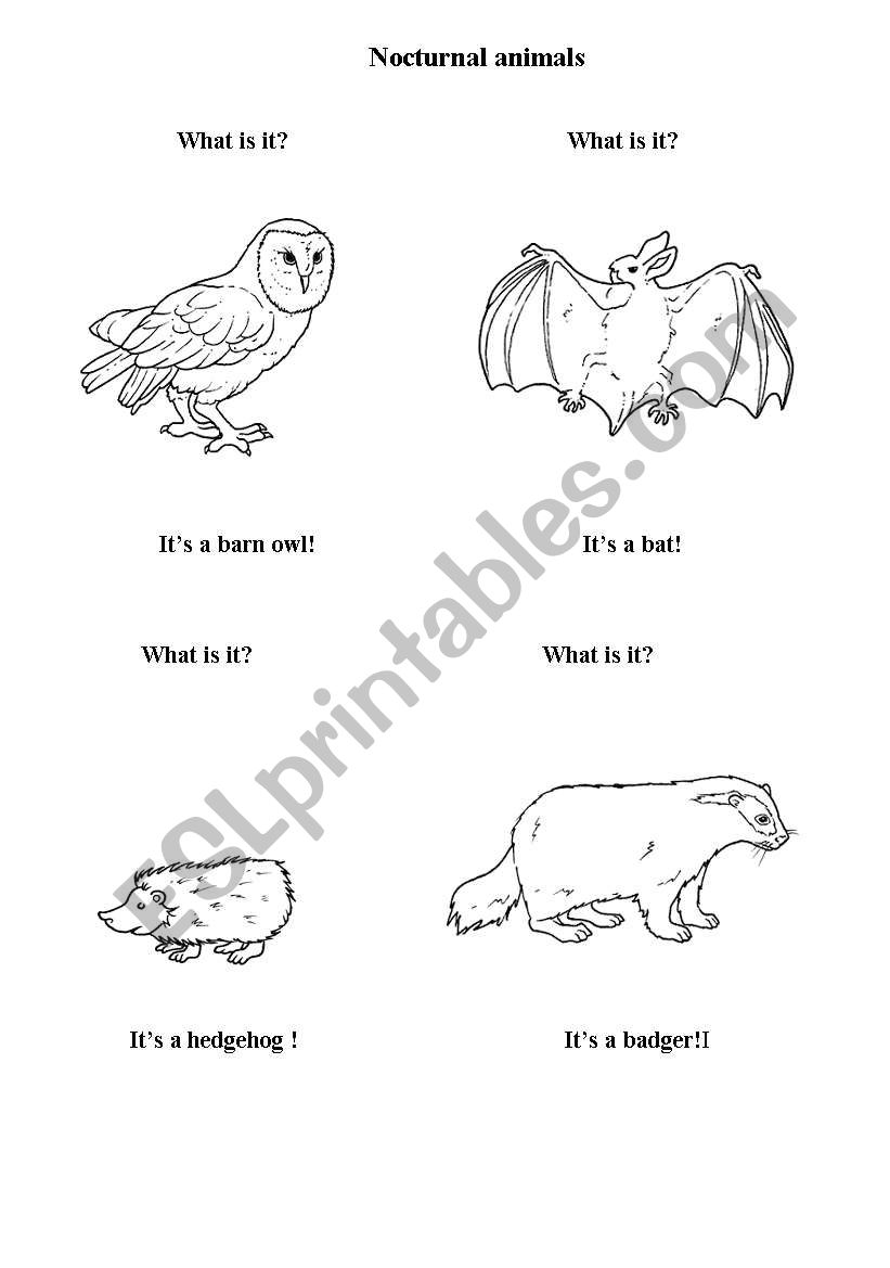 English worksheets: nocturnal animals