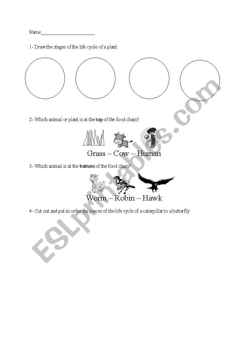 English worksheets: Life Cycles and Food Chain Unit Test