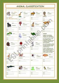 Animal Classification - ESL worksheet by cristinasuma