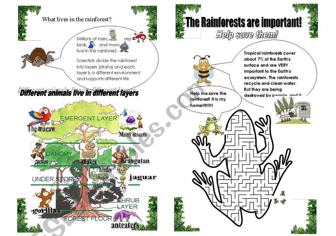 The Rainforest Part 2