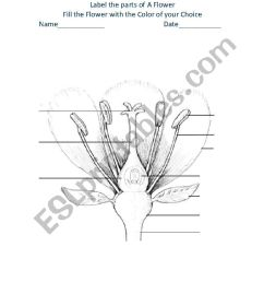 parts of a flower worksheet [ 821 x 1169 Pixel ]