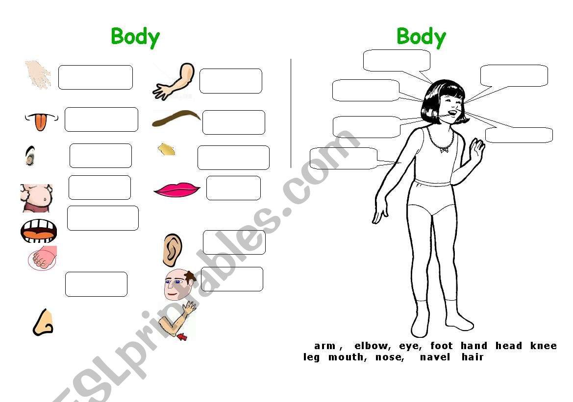 Body Parts 1