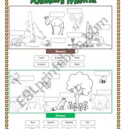 Animals Habitat (desert - forest) - Cut and paste part 2 - ESL worksheet by  lupiscasu [ 1169 x 821 Pixel ]