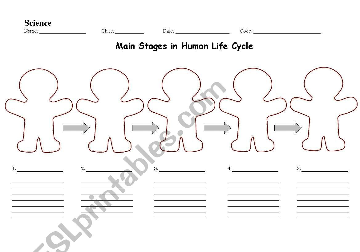 English Worksheets Main Stages In Human Life Cycle