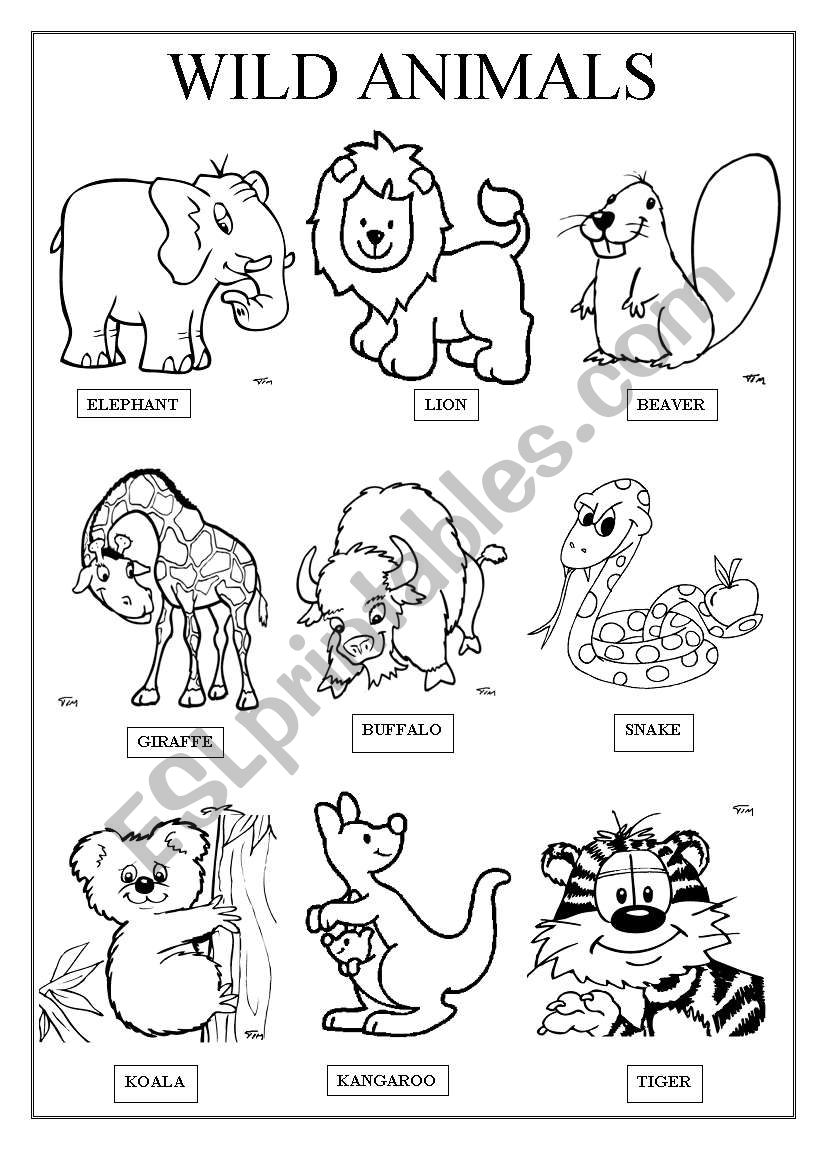 WILD ANIMALS ESL Worksheet By Famosa