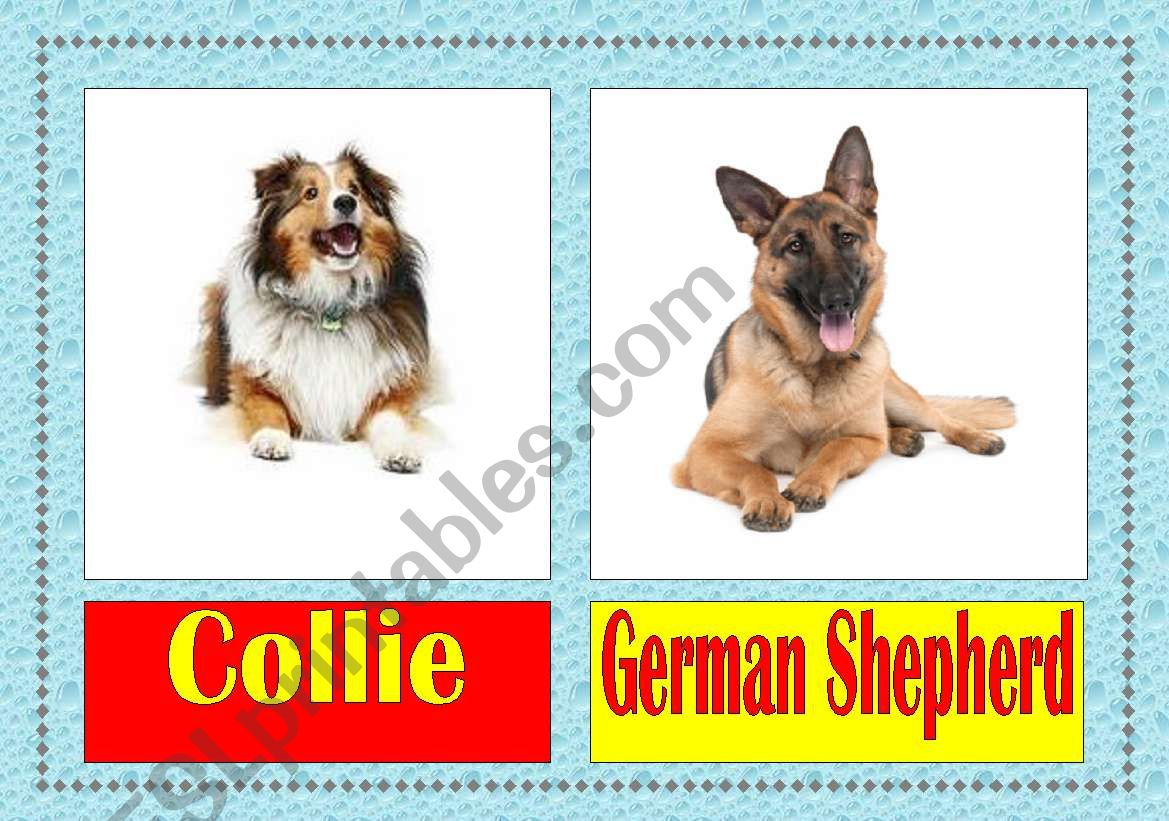 Dog Breeds Flashcards 1 3
