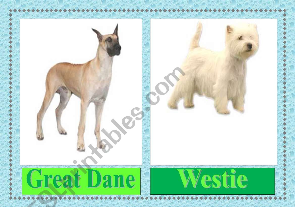 Dog Breeds Worksheet