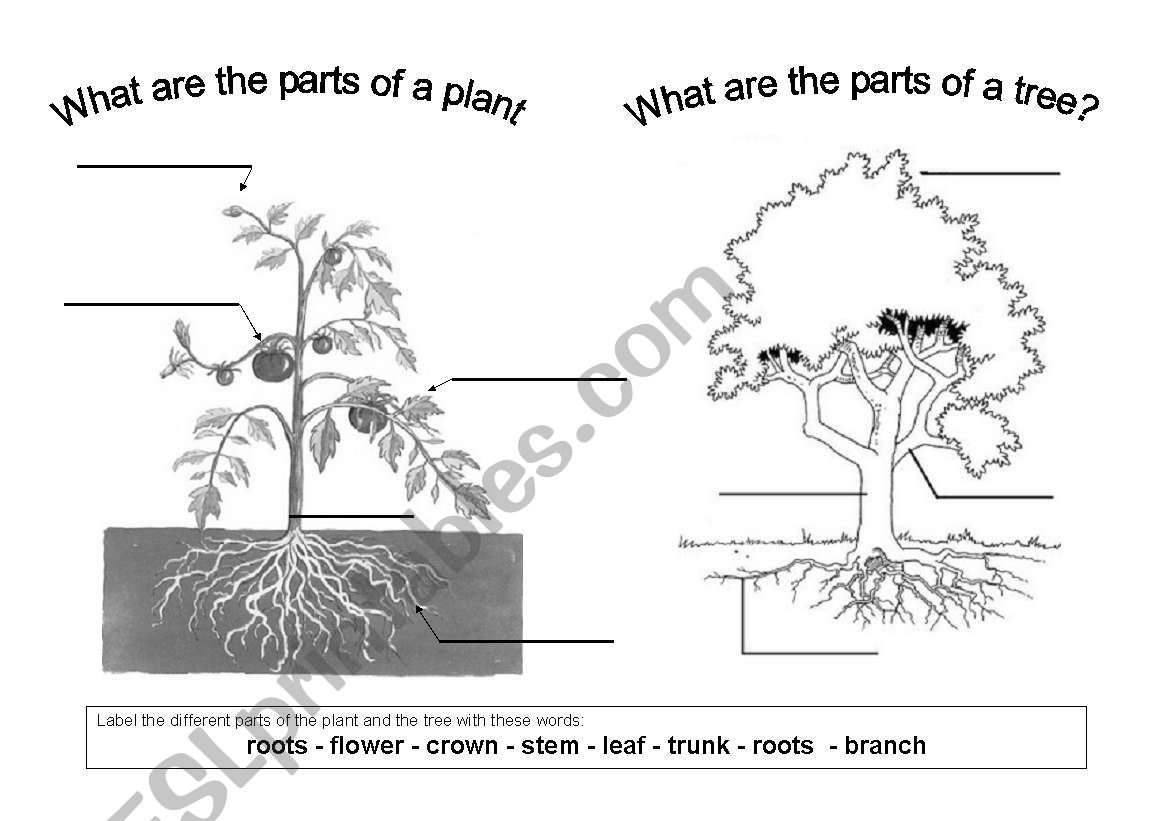 The Parts Of A Plant And A Tree