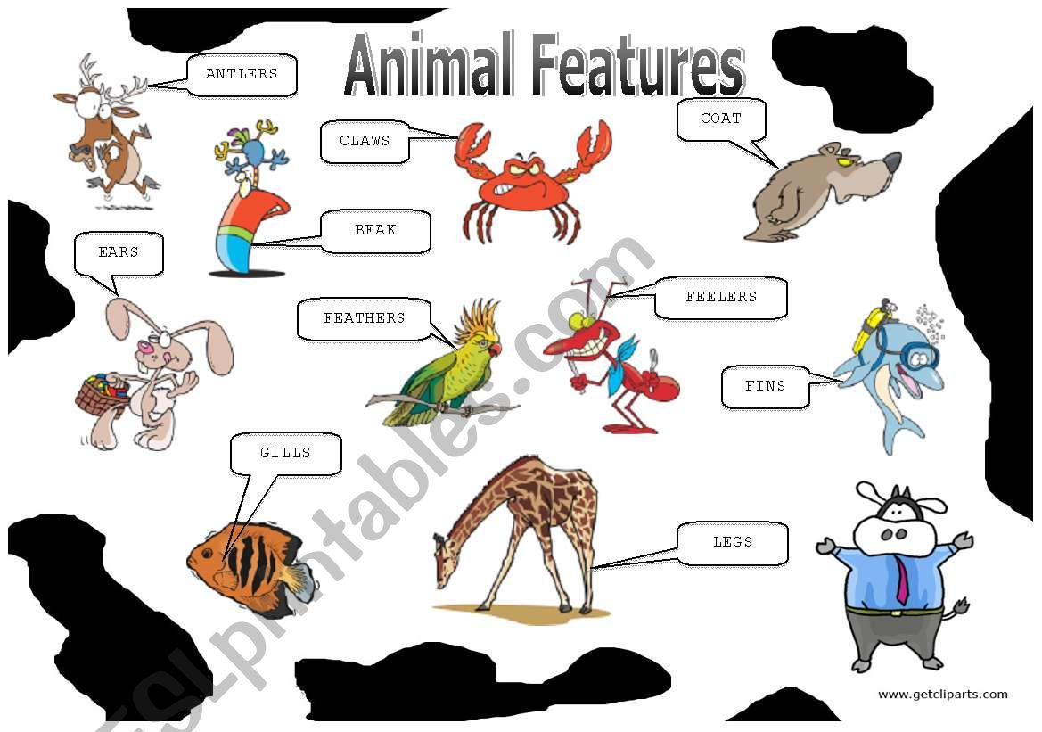 Animal Features 1 2 Picture Dictionary