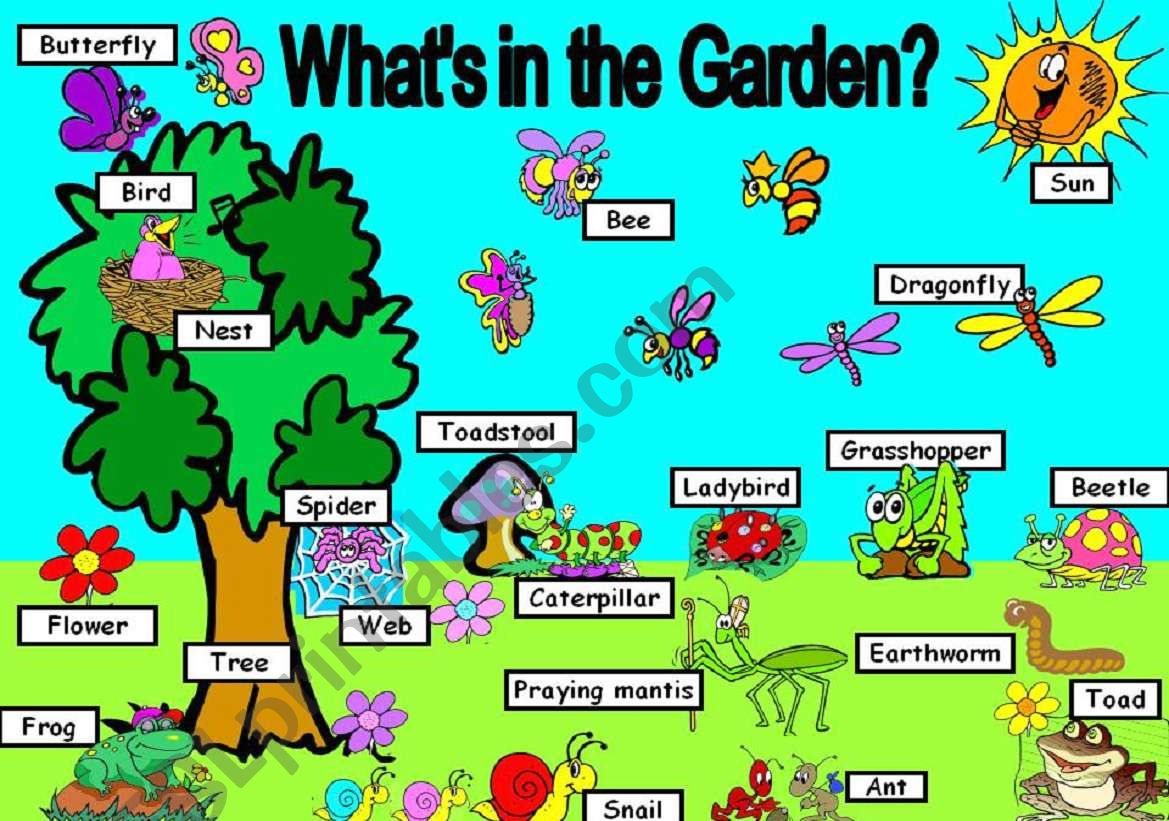 What S In The Garden