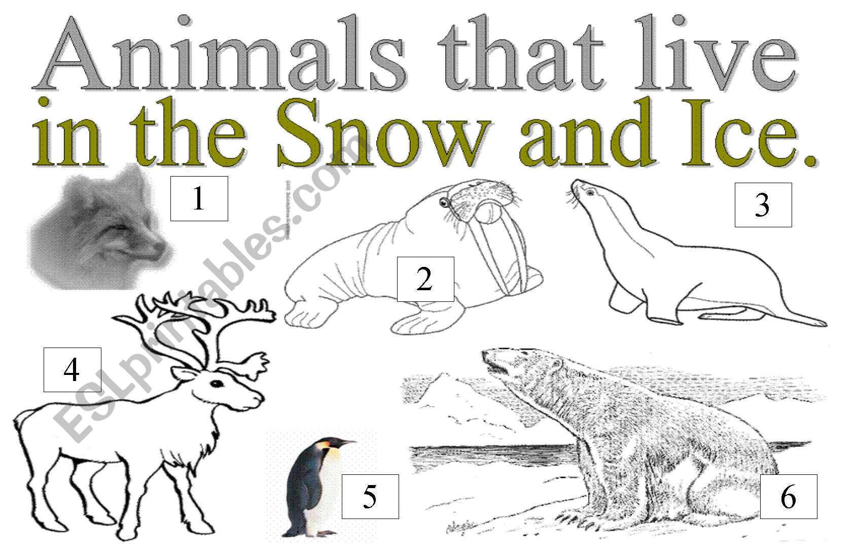 English Worksheets Animals That Live In The Snow And Ice