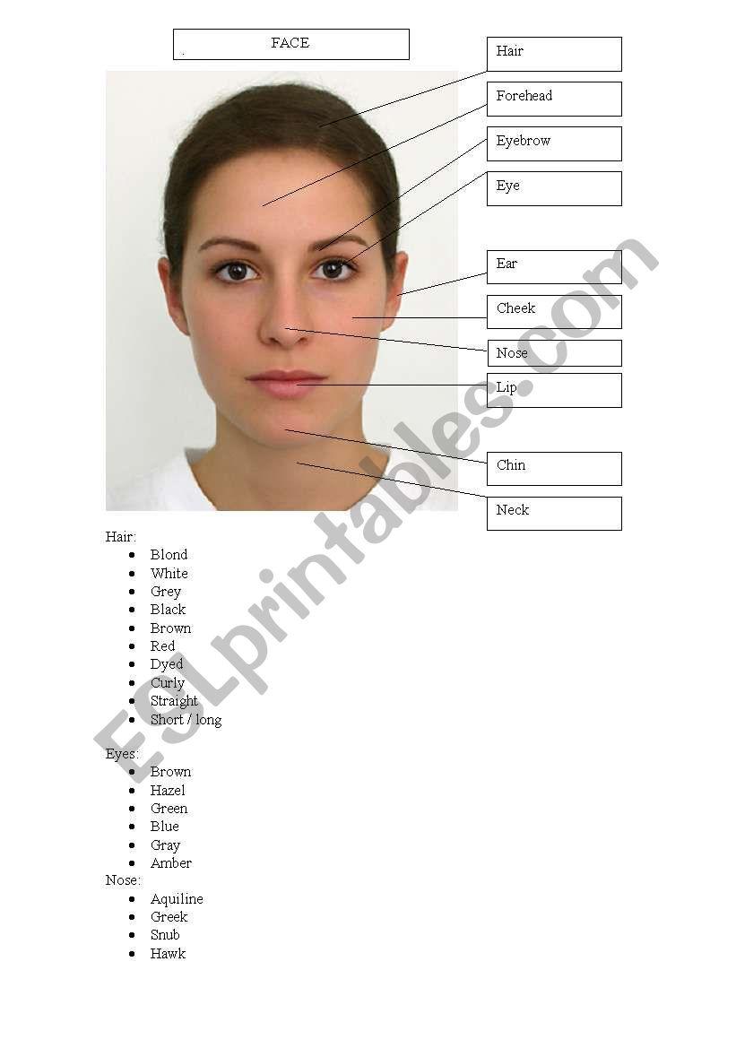 medium resolution of the human face vocabulary worksheet