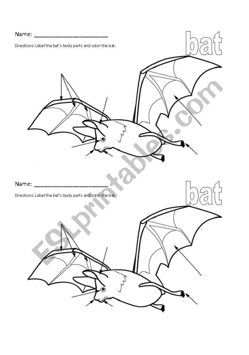 English worksheets: Bat Stellaluna Body Part Labeling