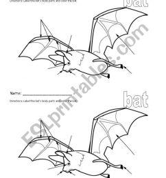 bat stellaluna body part labeling worksheet [ 821 x 1169 Pixel ]
