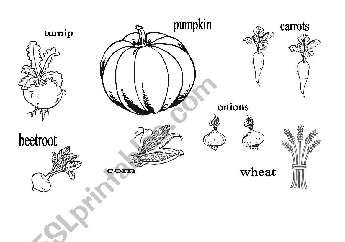 Autumn Worksheet Esl