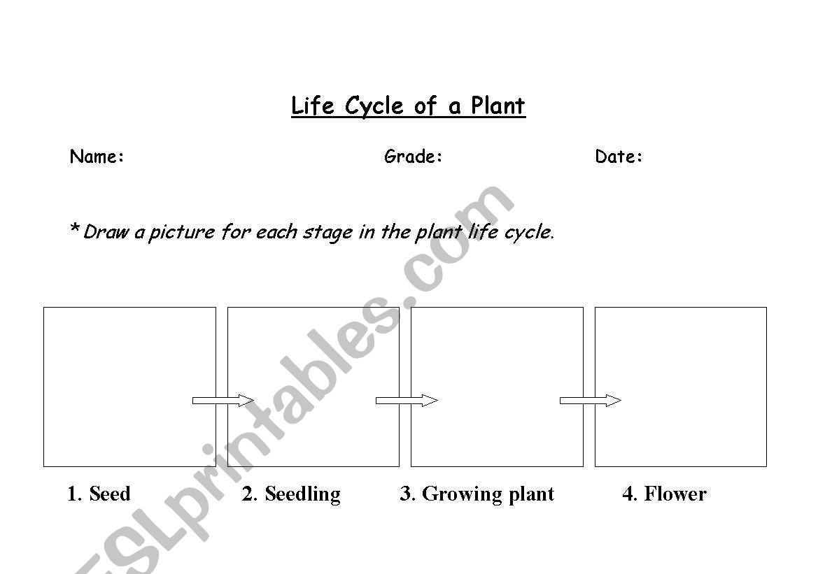 English Worksheets Plant Life Cycle