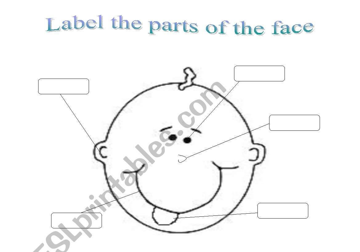 English Worksheets Face Parts