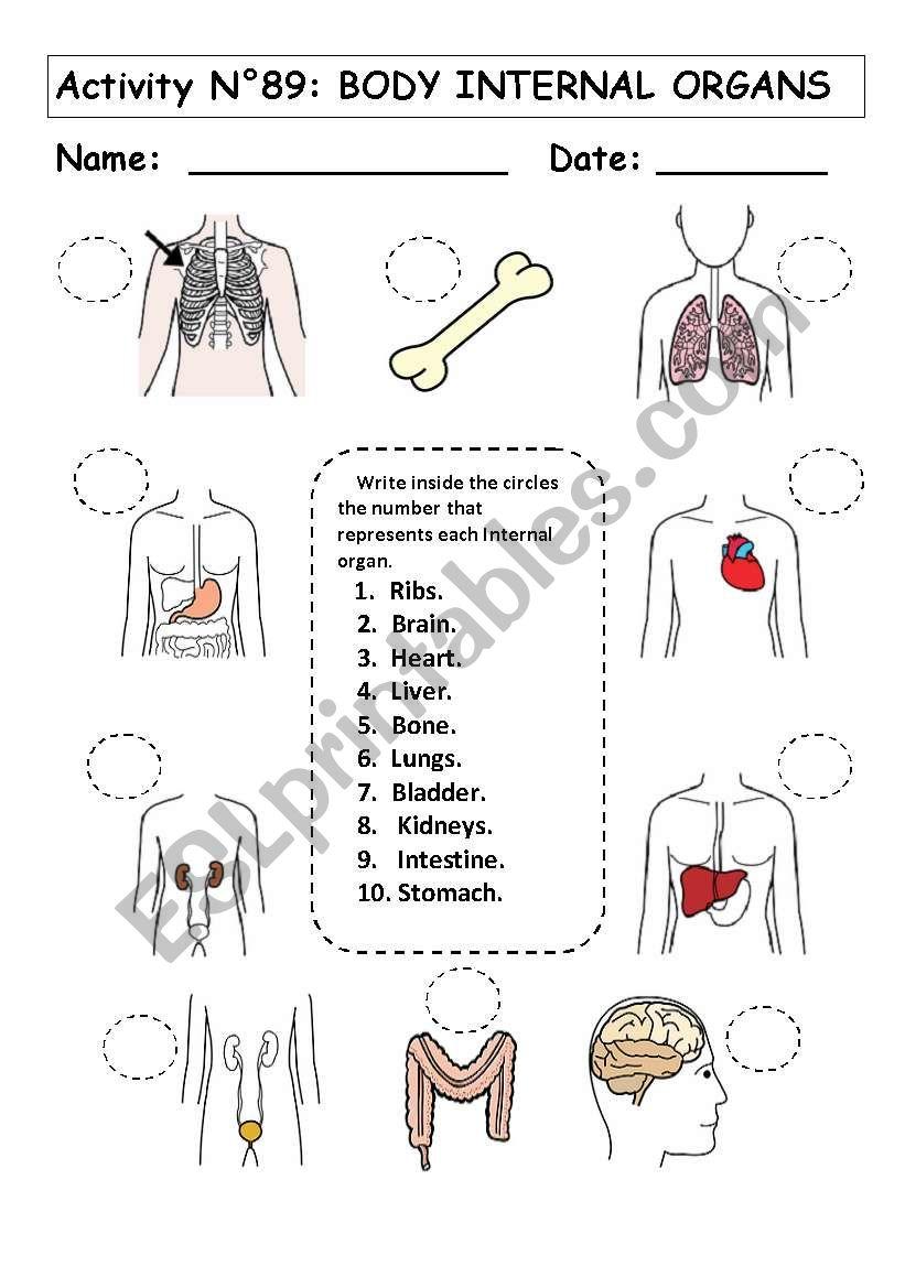 medium resolution of No 89: BODY INTERNAL ORGANS - ESL worksheet by andresdomingo