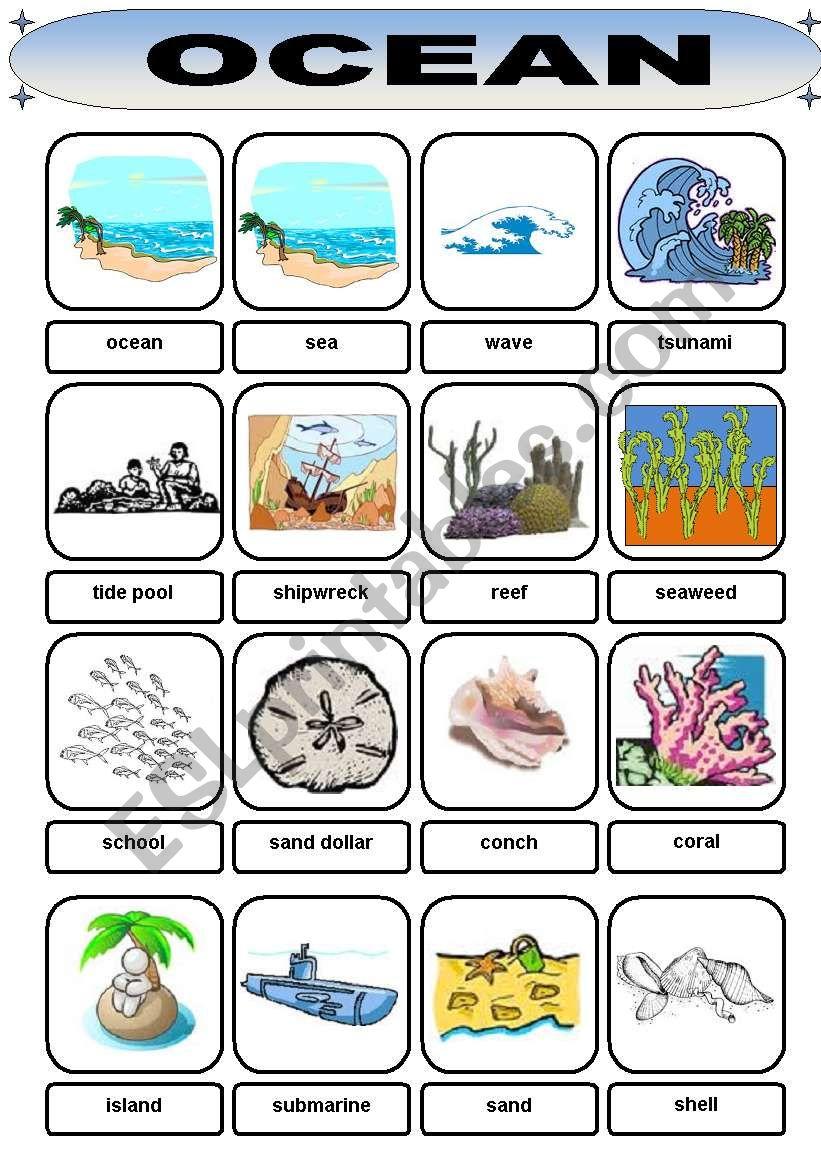 Ocean Vocabulary