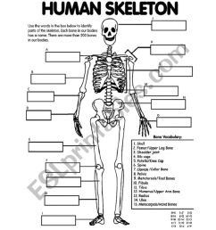 Skeletal System Worksheets - Bilscreen [ 1086 x 838 Pixel ]