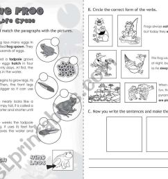 The Frog: Life Cycle - ESL worksheet by jazchulinchu [ 821 x 1169 Pixel ]