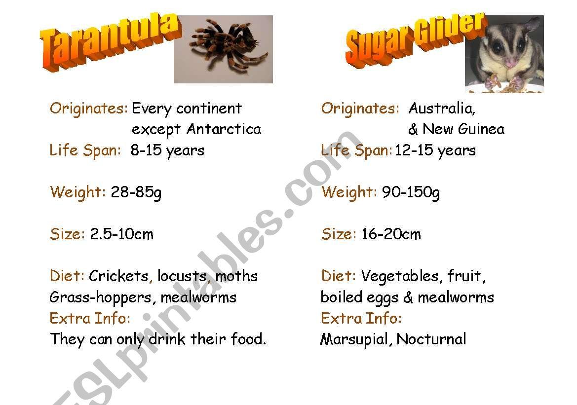 English Worksheets Exotic Pets