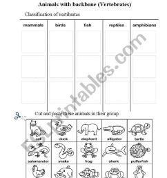 Animals with backbone - ESL worksheet by campus [ 1086 x 838 Pixel ]